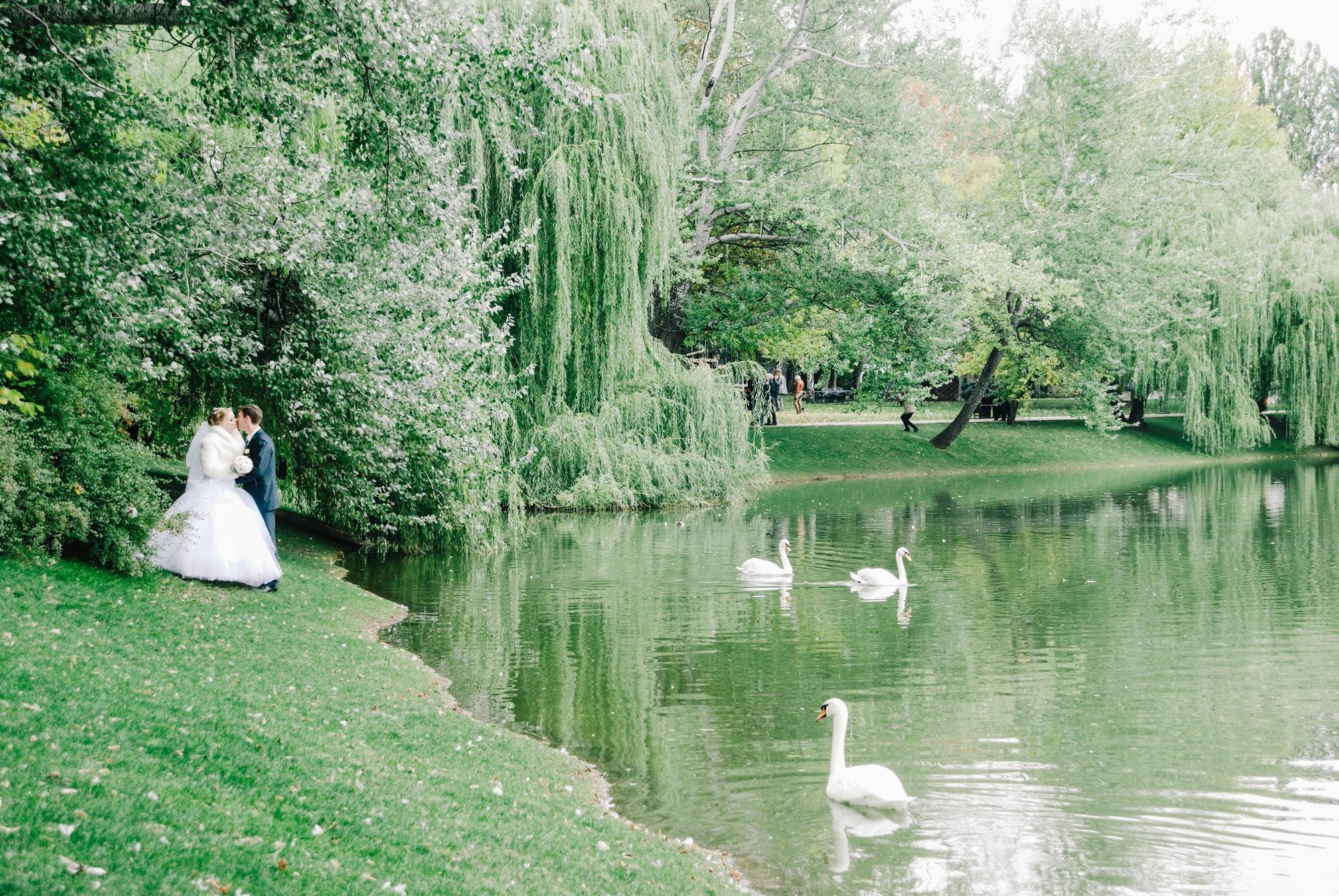 Молодожены в парке с лебедями - Фотограф Киев - Женя Лайт