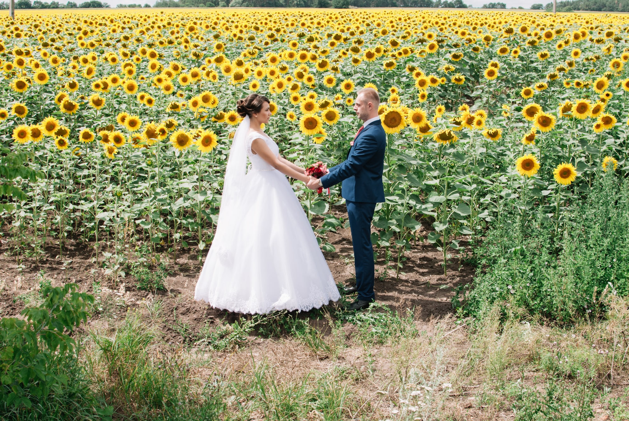 Жених и невеста в подсолнухах - Фотограф Киев - Женя Лайт